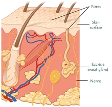 Excessive sweating and the scalp or head